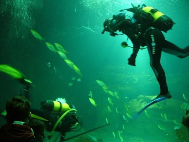 Аквариум Парижа (Aquarium de Paris- Cinéaqua)