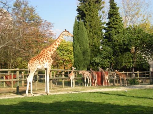 Венсенский зоопарк (Le zoo de Vincennes)