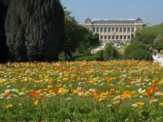"Цветущий музей – ""Сад короля"""
