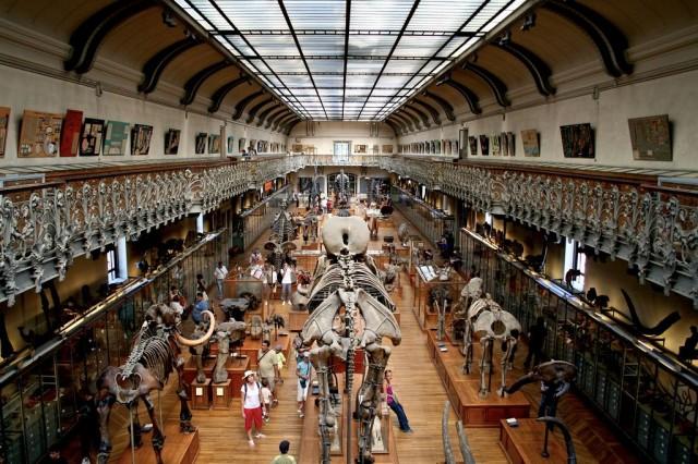 Палеонтологический музей (Galeries de Paléontologe et d'Anatomie comparée)